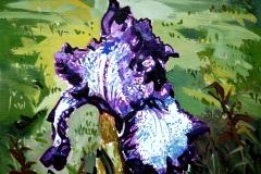 An Iris for Iris 8x10